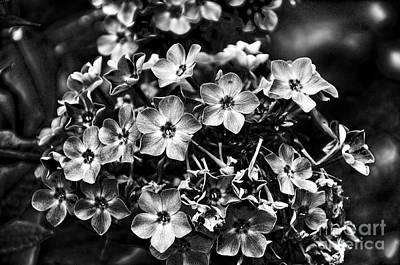 Photograph - Charcoal Flowers by Brenda Kean