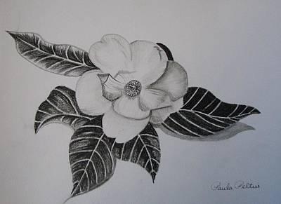 Magnolia Flower Drawing - Charcoal Magnolia I by Paula Peltier
