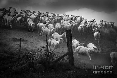 Photograph - Charging The Gate In Black And White by Nareeta Martin