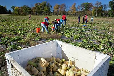 Gleaners Photograph - Charitable Use Of Leftover Crops by Jim West