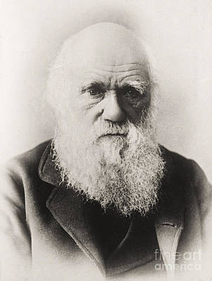 Well-known Photograph - Charles Darwin by English School