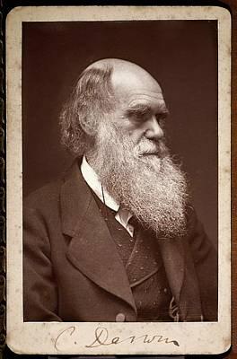 Charles Darwin Photograph - Charles Darwin by Paul D Stewart