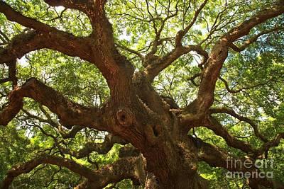 Photograph - Charleston Angel Oak by Adam Jewell