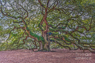 Photograph - Charleston Angel Oak by Dale Powell