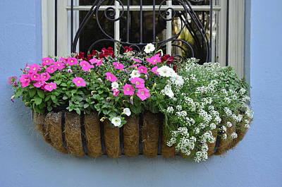 Photograph - Charleston Flower Box 4 by Allen Beatty