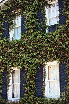 Photograph - Charleston Ivy by John Rizzuto