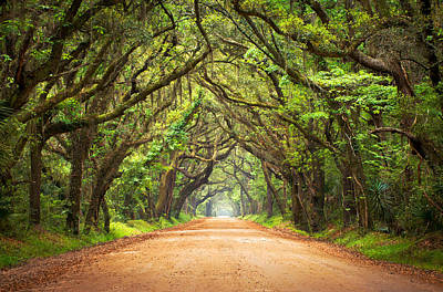 Oak Trees Photograph - Charleston Sc Edisto Island - Botany Bay Road by Dave Allen
