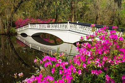 Azalea Photograph - Charleston Sc Spring Azalea Bloom by Dave Allen