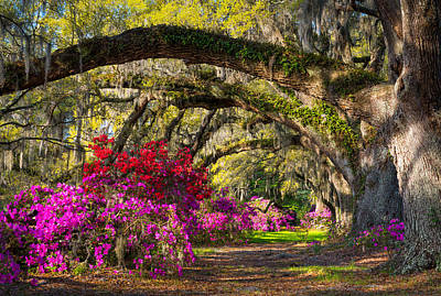 Charleston Sc Spring Azalea Flowers - A Servant's Grace Art Print by Dave Allen