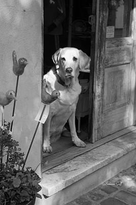 Charleston Shop Dog In Black And White Art Print by Suzanne Gaff
