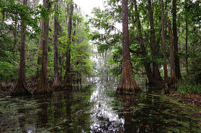 Charleston Swamp Art Print