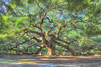 Photograph - Charleston's Angel Oak Tree by Pierre Leclerc Photography