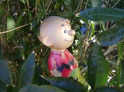 Linus Wall Art - Photograph - Charlie Brown by Dan Twyman