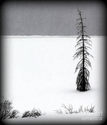 Photograph - Charlie Brown's Christmas Tree by C Ray  Roth