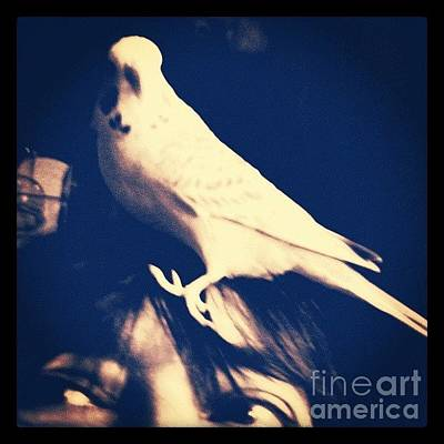 Birds Wall Art - Photograph - Charlie Gets A Better View From My Head by Isabella Shores