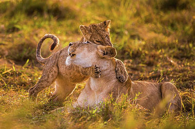 Lioness Wall Art - Photograph - Charm by Mohammed Alnaser