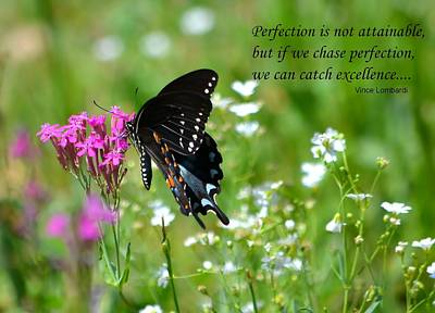 Photograph - Chasing Perfection by Deena Stoddard