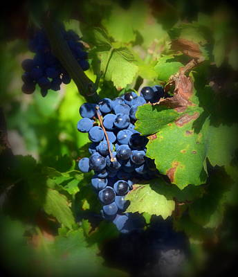 Photograph - Chateauneuf Du Pape Hidden Treasure by Carla Parris