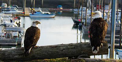 Bald Eagles Photograph - Chatty Bald Eagles Homer Alaska by Debra  Miller