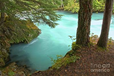 Photograph - Cheakamus Blue Waters Under Cedar by Adam Jewell