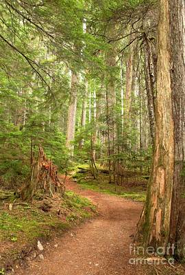 Photograph - Cheakamus Lake Path by Adam Jewell