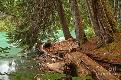 Photograph - Cheakamus Lake Rainforest - British Columbia by Adam Jewell