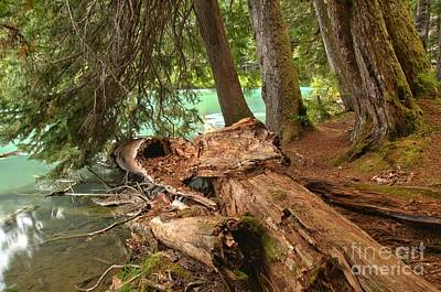 Photograph - Cheakamus Lake Shoreline by Adam Jewell