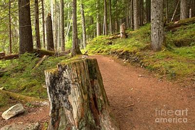 Photograph - Cheakamus Lake Trail by Adam Jewell