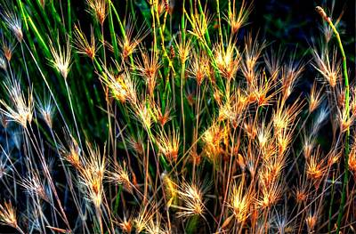 Photograph - Cheat Grass 15750 by Jerry Sodorff