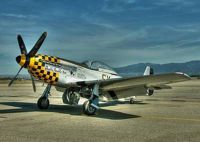 Photograph - Checker Nose Warrior by Jeff Cook