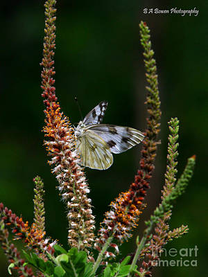 Photograph - Checkered White On An Indigo by Barbara Bowen