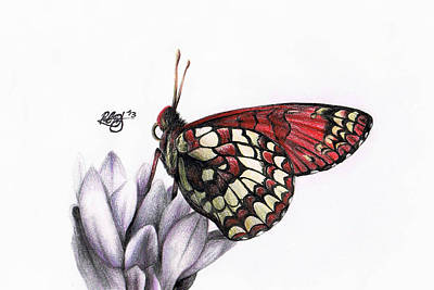 Checkerspot Drawing - Checkerspot by Rachel Rothberg