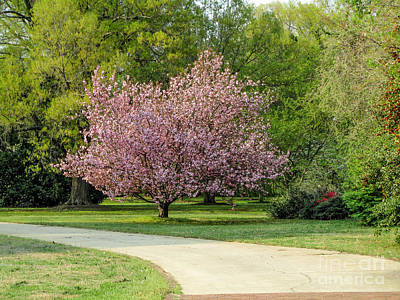 Photograph - Cheerful Cherry Blossom by Jaclyn Hughes Fine Art