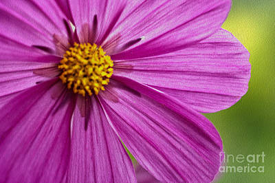 Photograph - Cheerful by Nur Roy