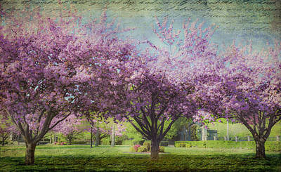 Photograph - Cheery Cherry Trees - Nostalgic by Karen Stephenson