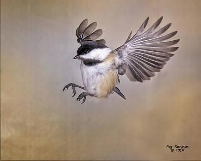 Photograph - Cheery Chickadee by Peg Runyan