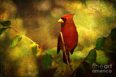 Cardinal Digital Art - Cheery Red Cardinal  by Lianne Schneider