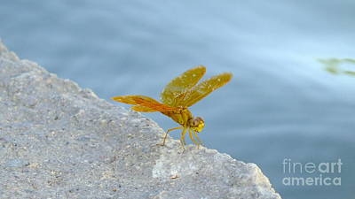 Metal Dragonfly Photograph - Cheesy Grin by Chandra Nyleen