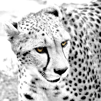 Digital Art - Cheetah 3 Quarters Macro Profile Color Splash Conte Crayon Digital Art Square Format by Shawn O'Brien