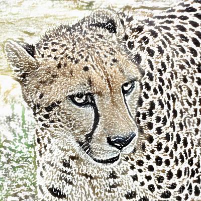 Cheetah Digital Art - Cheetah 3 Quarters Macro Profile Colored Pencil Digital Art Square Format by Shawn O'Brien