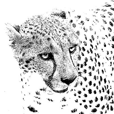 Digital Art - Cheetah 3 Quarters Macro Profile Stamp Black And White Digital Art Square Format by Shawn O'Brien