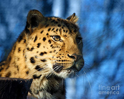 Photograph - Cheetah Acinonyx Jubatus by Terri Waters