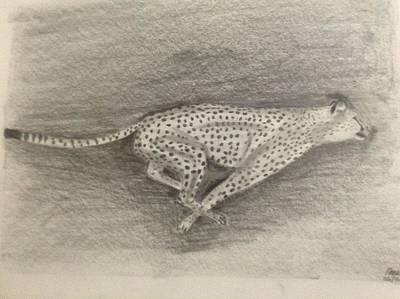 Cheetah Drawing - Cheetah by Anu Radha