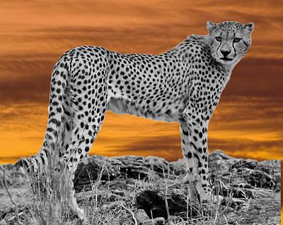 Cheetah At Dusk Art Print by Larry Linton