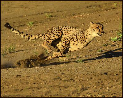 Cheetah Photograph - Cheetah At Full Run by LeeAnn McLaneGoetz McLaneGoetzStudioLLCcom
