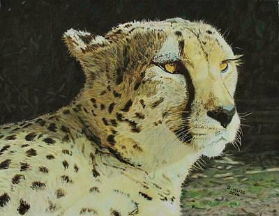Cheetah Drawing - Cheetah by Bernd Huss