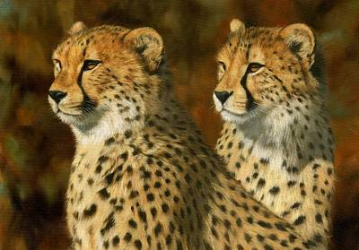 Animals Paintings - Cheetah Brothers by David Stribbling