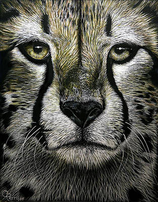 Cheetah  Print by Chris Perry