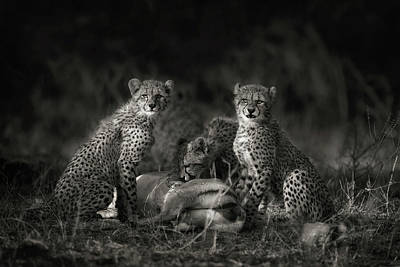 Feeding Photograph - Cheetah Cubs by Mario Moreno