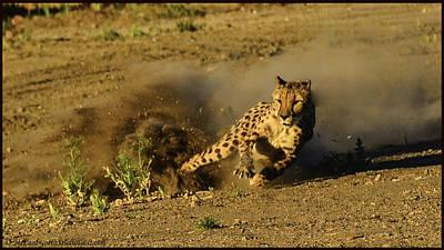 Cheetah Photograph - Cheetah Dust Trail by LeeAnn McLaneGoetz McLaneGoetzStudioLLCcom